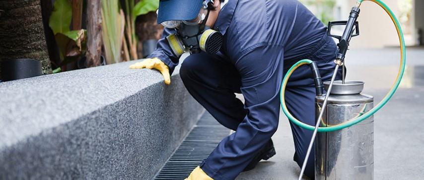 servicii de dezinsectie dezinfectie deratizare